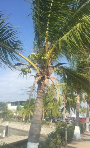 A local warned me not to walk under the coconut trees in case a nut fell on my head and killed me.  He assured me it happened it all the time.  I Googled it - it has happened about 7 times in the last 300 years.